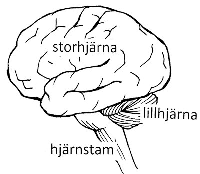blödning i lillhjärnan symtom