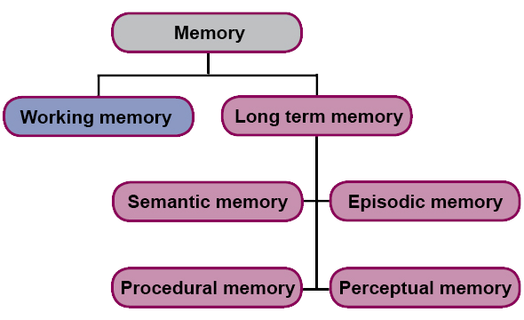Memory divided in working memory and long-term memory